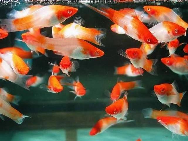 Acvaristica si accesorii pentru acvariu