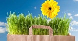 Reduceri cumparaturi Primavara 2017