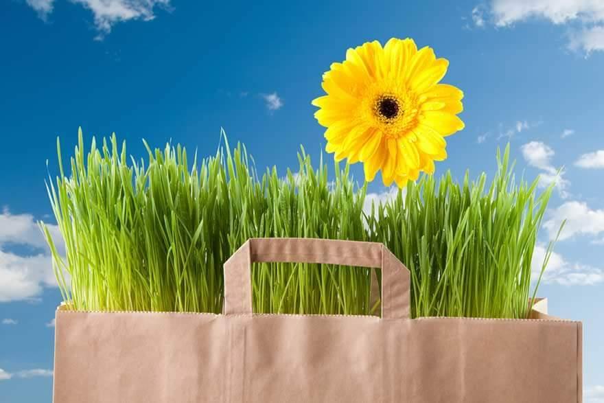 Reduceri cumparaturi Primavara 2021